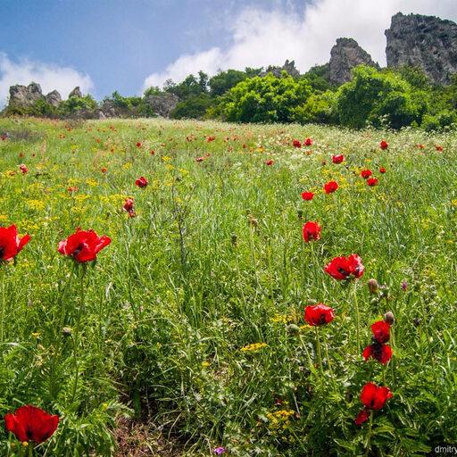 Реликтовые маки на горе Бештау