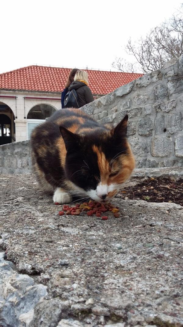 Хвостатые жители древнего города Дубровник
