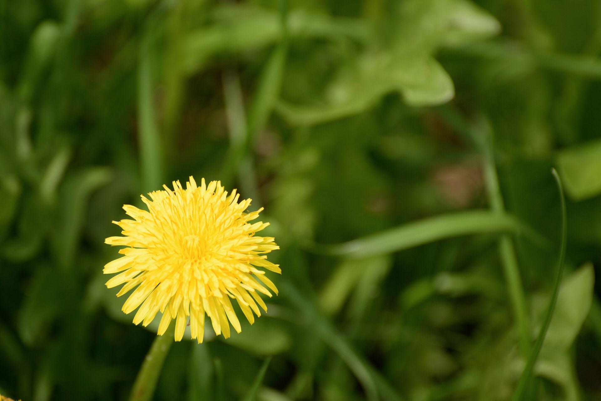 Разные цветочки уменя всадочке:))Часть 2