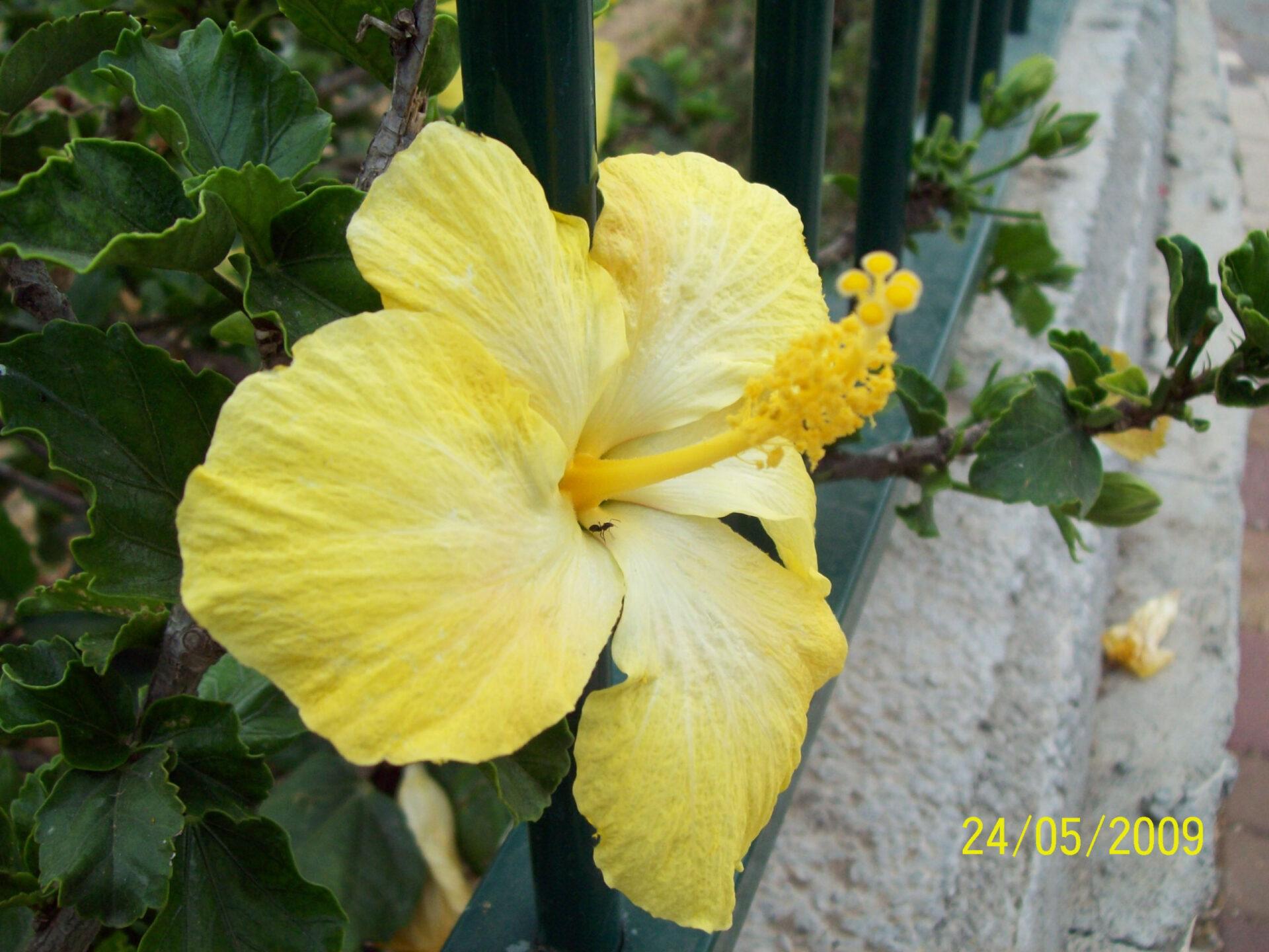 Цветущий Израиль