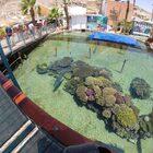 Коралловый риф, подводная обсерватория, Эйлат