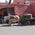 Мандариновое королевство Марокко!!! ЧАСТЬ 1: МАРРАКЕШ ИФЕС!!!
