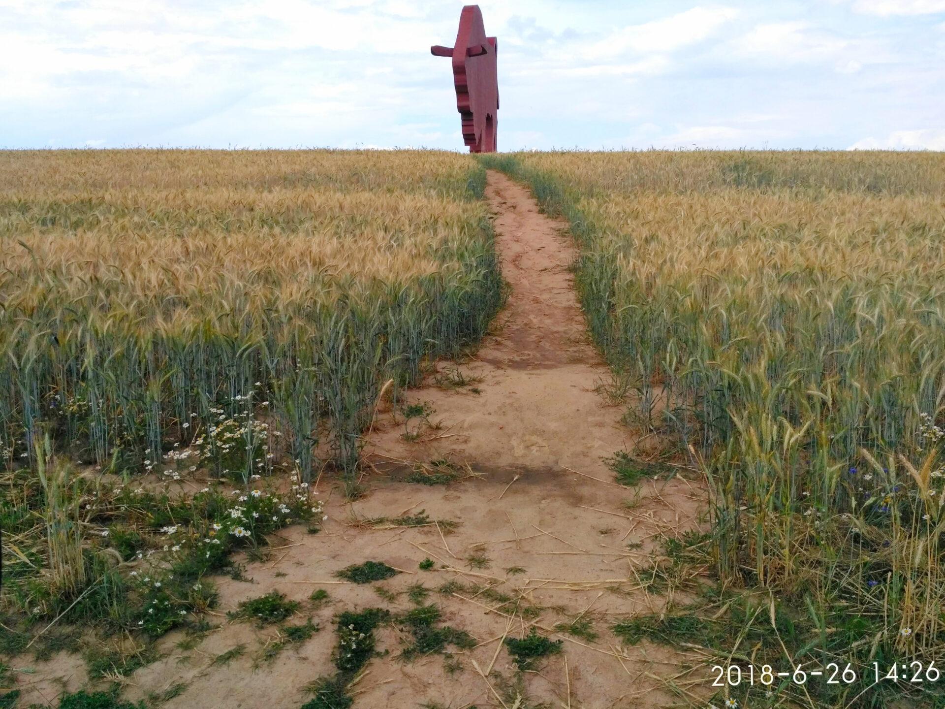 Гигантский белорусский зубр натрассе м1 взят