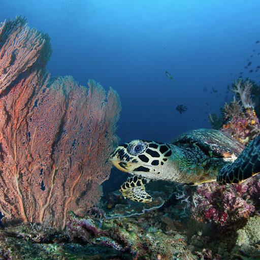 Один день в Папуа. Черепахи и кораллы