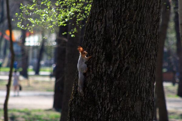 Весенняя прогулка впарках Краснодара