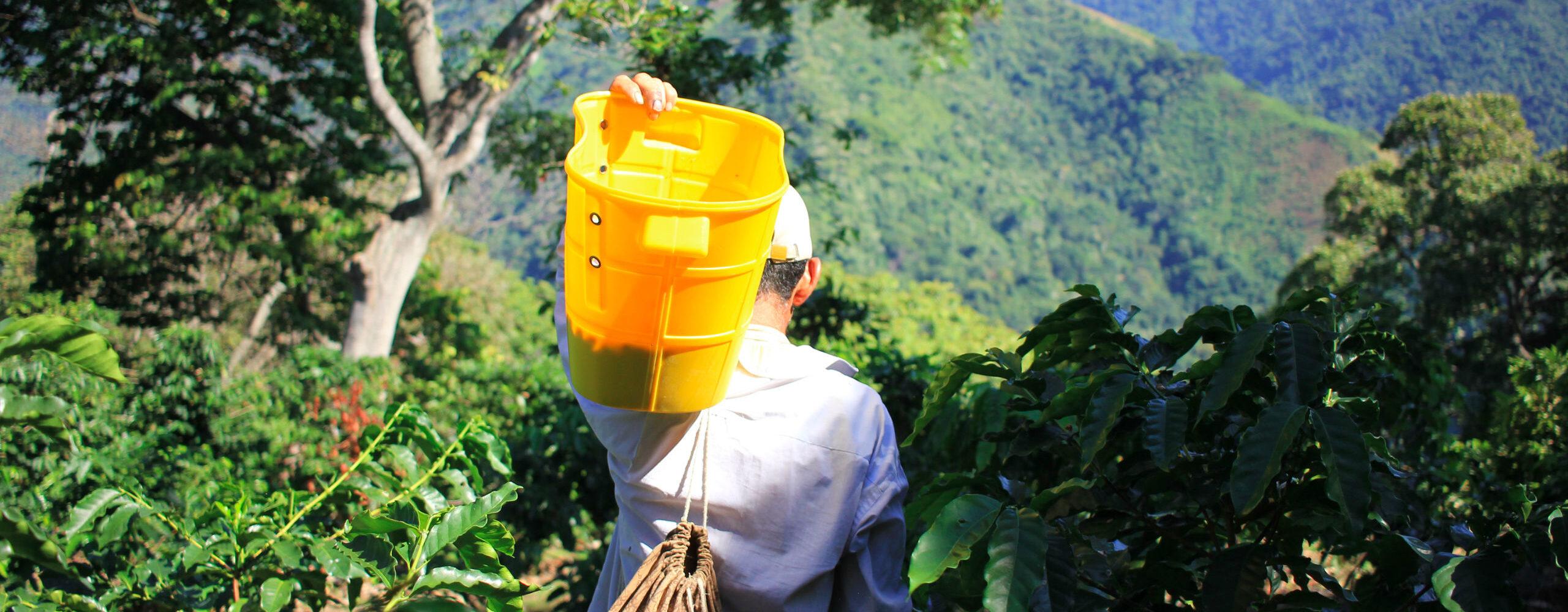 Как рождается лучший кофе мира. Колумбия