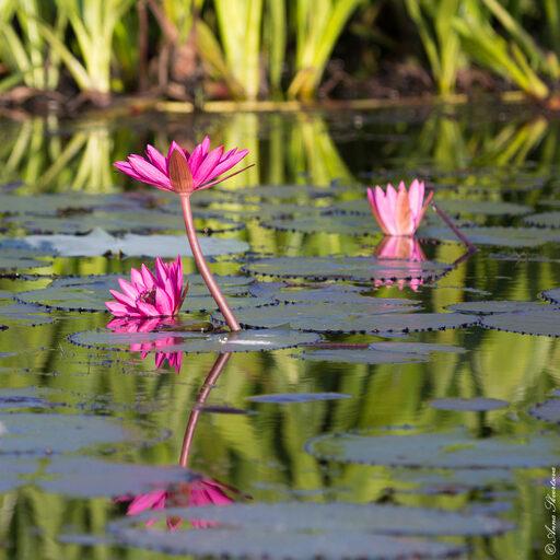 Розовый рассвет на озере Тале Ной