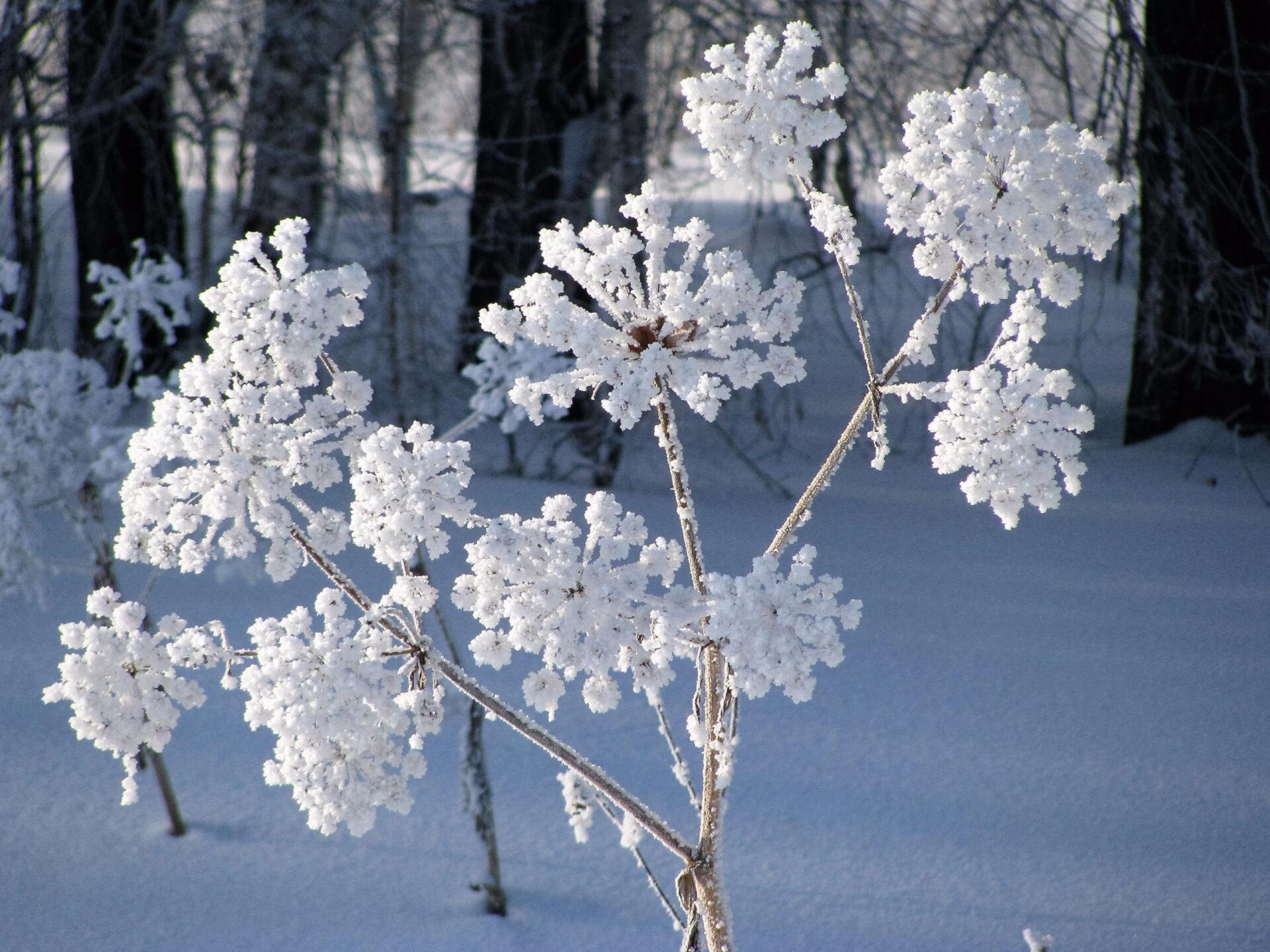 Немного зимней Икши.