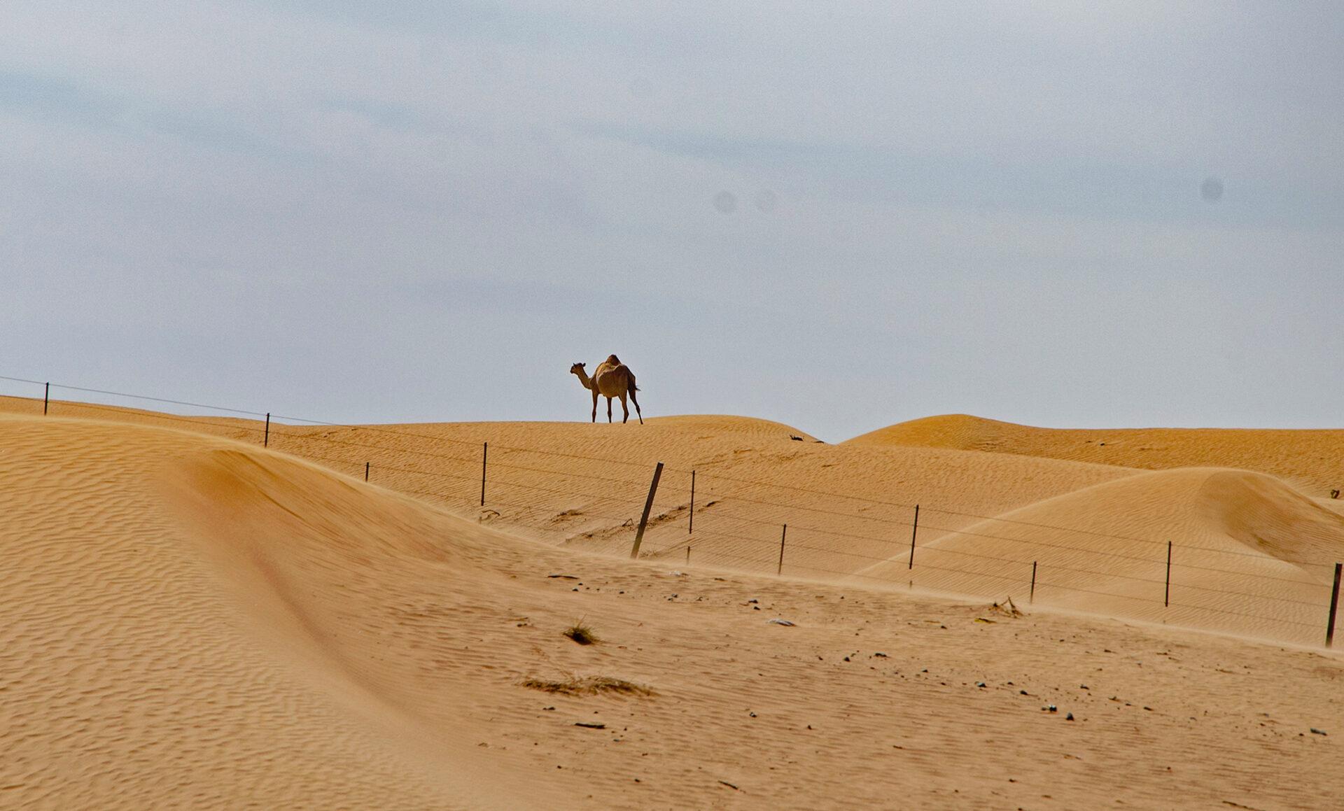 Арабские горы ипустыни 2019