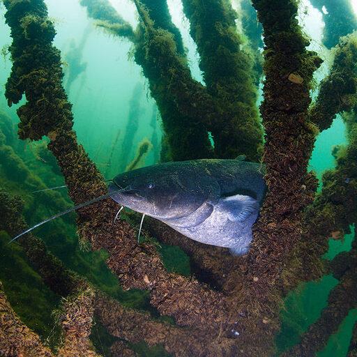 Подводный мир ближе чем кажется