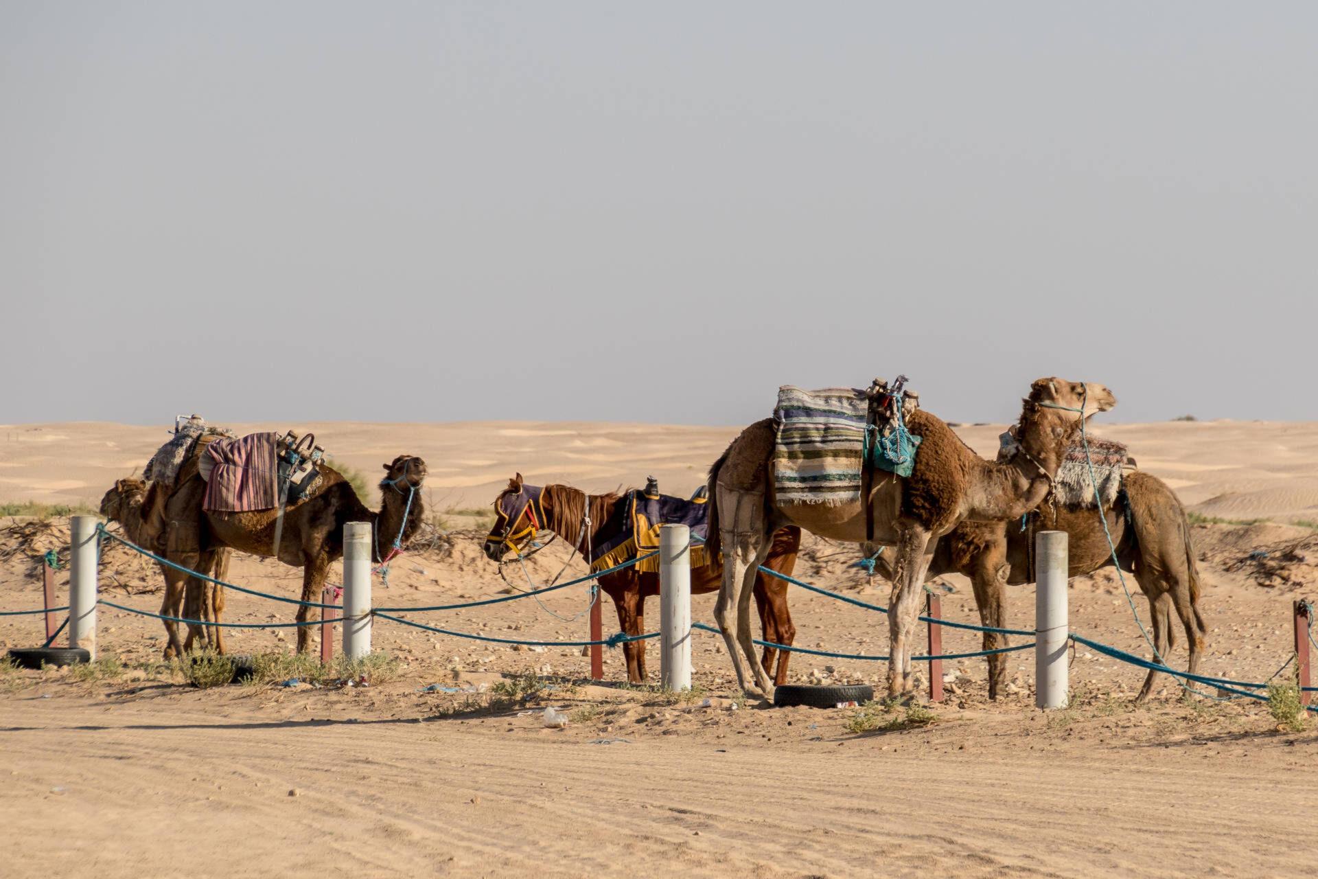 Тунис. Закат впустыне
