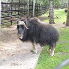 Красноярский зоопарк «Роев ручей»