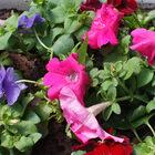 Разные цветочки уменя всадочке:))