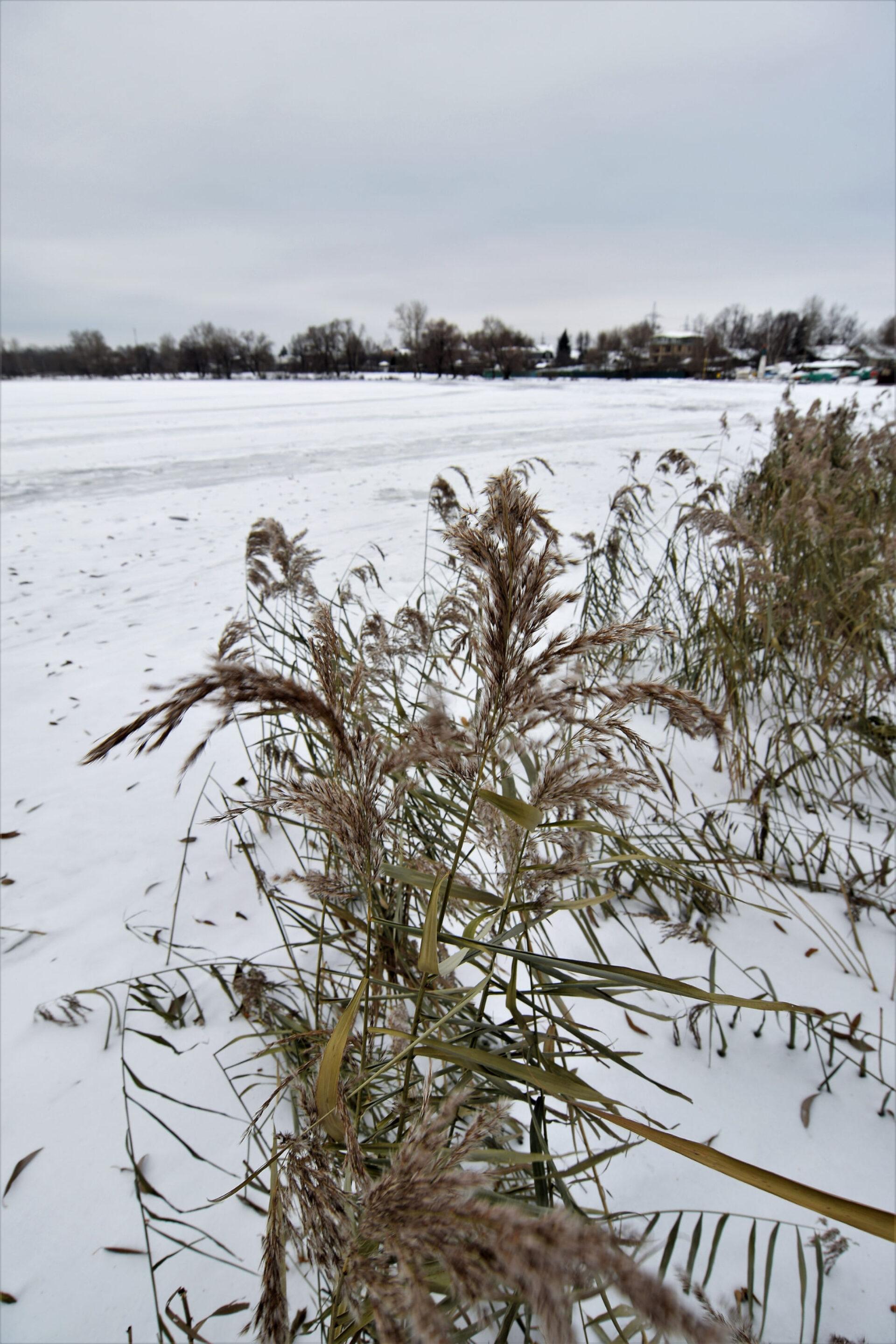 Зима пришла наБелое озеро