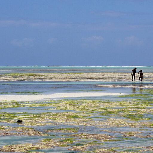 Занзибар — чудо-остров, жить на нем легко и просто
