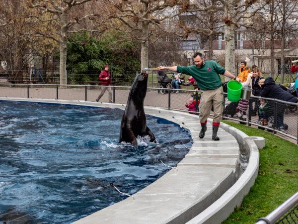Зоопарк Штутгарта (Wilgelma)-1. Кормление Морских котиков.